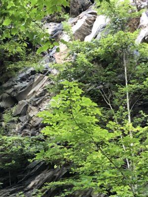photo pf foliage in wise VA