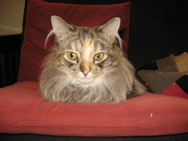 A photo of John's cat, Lula
